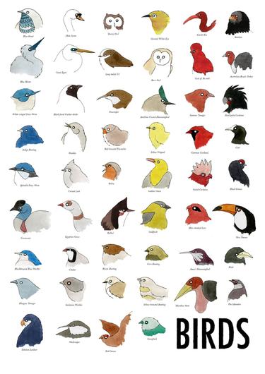 poster-oiseaux.jpg
