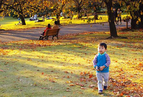 秋っぽい景色